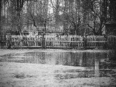 XE56 - wideopenproject - rain and fence WEB (manuel ek) Tags: blackandwhite bw rain weather fence lens puddle prime rainyday sweden fujifilm malm fujinon 56mm xe2 fujilove manuelekphoto