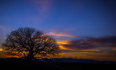 The Old Oak Prayer (Juro_Photography) Tags: blue sunset sky tree nature colors clouds outdoors sundown outdoor dusk sunsets oaktree wildlifephotographer naturephotography mounts naturepics limeridgeopenspace sonya580