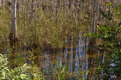 DSC_0014 (ACEZandEIGHTZ) Tags: nature water grass landscape nikon outdoor everglades bigcypress nationalpreserve looproad d3200