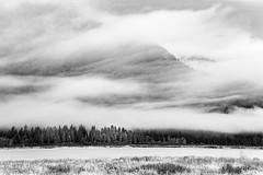 Pitt-Addington marsh (XyrisKenn) Tags: trees cloud mist mountain field mystery canon 1d mysterious l iv 35350