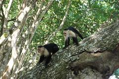 Cahuita and Manzanillo, Costa Rica, January 2016