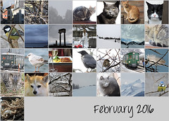 February 2016 mosaic (keepps) Tags: mosaic month bighugelabs