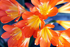 (Sara Garca.) Tags: flowers orange flower color macro love primavera nature beautiful yellow canon relax eos spring amazing nice spain flora colorful paradise colours lovely canoneos belleza colorsinourworld