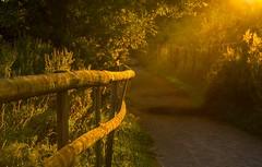 Summer Fences (paulapics2) Tags: summer sunlight nature fence golden path fences grasses canon5d goldenhour fencedfriday