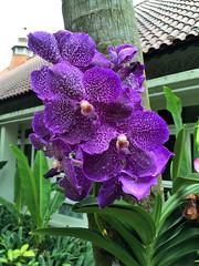 Img507157nx2 (veryamateurish) Tags: singapore shangrilahotel iphone6