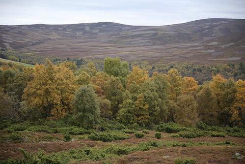 Schottland_2015_05_Braemar_009