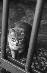 Stray Friends #12 (Federico Pitto) Tags: bw d76 nikonfe2 nikkor35mm28 rolleirpx400 strayfriends