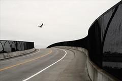 Road Bird (Jonathan Kos-Read) Tags: choice