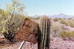Sign (wyatthalchishick) Tags: cactus tree film sign fuji superia 400 nikkormat
