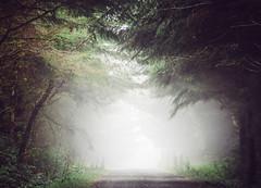 Head into the Fog (Bo47) Tags: trees usa green fog oregon forest us florence unitedstates northamerica dirtroad geotag 2013 bo47 lumixgvario45200mmf4056 olympusomdem5