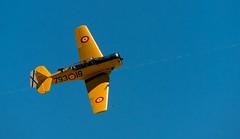 One day at the FIO (prodicio) Tags: aircraft samsung planes fio avion texan t6 50200 fundacininfantedeorleans