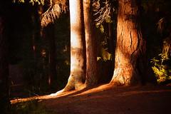 August Light (Sergei P. Zubkov) Tags: wood trees august 2015