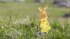 Colored wooden easter bunny on grassland (piropiro3) Tags: grass easter gras ostern easterbunny osterhase