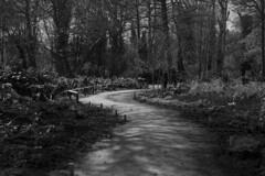 _ (Matthew Piper) Tags: park blackandwhite bw spring nikon d800 bushy nikon50mmf14 nikond800