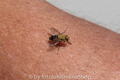 Argentinien_Insekten-82 (fotolulu2012) Tags: tierfoto
