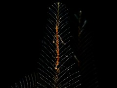 P3225045 (Jeannot Kuenzel) Tags: leica blue sea macro water port photography islands la mediterranean underwater alien under deep scuba diving canarias olympus malta el zen canary supermacro moods asph islas f28 45mm underwaterworld s2000 dg gomera 240z hierro underwaterphotography extrememacro ois jeannot inon macroelmarit underwatercreature kuenzel z240 maltaunderwater underwatermacro underwateralien supermacrophotography ucl165 wwwjk4unet jk4u epl5 maltaunderwatermacro maltaunderwaterphotography bestmaltaunderwaterpictures maltamacro maltascubadiving underwatersupermacro jeannotkuenzel aliensofthedeepblue superextrememacro aliensofthesea