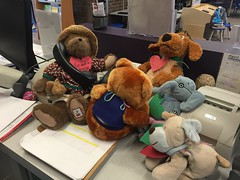 Who is ordering the pizza? (scotchplainspubliclibrary) Tags: animal stuffed sleepover scotchplains scotchplainspubliclibrary