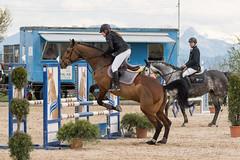 DSC09226_s (AndiP66) Tags: springen hildisrieden reitsportcenter estermann traselinge 2016 september pferd horse schweiz switzerland kantonluzern cantonlucerne concours wettbewerb horsejumping equestrian sports springreiten pferdespringen pferdesport sport sony sonyalpha 77markii 77ii 77m2 a77ii alpha ilca77m2 slta77ii sony70400mm f456 sony70400mmf456gssmii sal70400g2 andreaspeters luzern ch