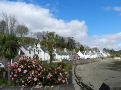 Welcome to Plockton, West Coast of Scotland, April 2016 (allanmaciver) Tags: pink blue trees sea sky white west weather clouds coast highlands bush village view side low style tourist palm camellia quaint plockton jewel cottages allanmaciver
