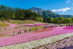 LHM_0125 (Leo Hartadi) Tags: park nature japan landscape saitama chichibu seibu
