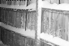 IMG_5104 (springday) Tags: family winter white snow canon wonderful fun virginia january richmond lovely winterwonderland rva springday 2016 wonderfulday dayspring highlandsprings snowpocalypse january2016 winter2016 snowpocalypse2016