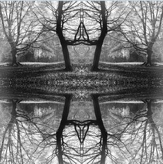 Symetrical (april-mo) Tags: trees art collage surreal symmetry symmetrical blackandwhitepicture experimentaltechnique surrealtrees