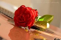 Mi Alhambra / My Alhambra (suominensde) Tags: plant flower reflection planta rose nikon guitar guitarra flor rosa alhambra classical bouquet reflexion clsico d5300 alhambraconrosaroja