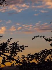 Plum Tree 20140715 (caligula1995) Tags: clouds plumtree 2014