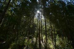 Somewhere near Sydney (d1methyl3pta) Tags: coast bush nikon g central sydney australian nikkor afs dx hinterland d7100 1685mm