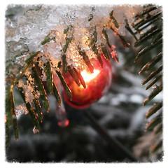 backyard Christmas lights ~ HMM, HTT & HBW! (karma (Karen)) Tags: trees decorations texture ice home lights backyard dof bokeh maryland baltimore negativespace christmastrees macros hmm squared htt hbw macromondays cmwdred bokehwednesdays