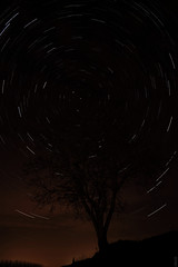 arbre (chenglongstephan) Tags: city winter red sky tree night stars star space hiver north poetic pole nuit arbre mouvement toiles circumpolaire