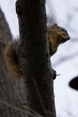 DSC00227.jpg (Christopher B Everett) Tags: squirel dallasarboretum
