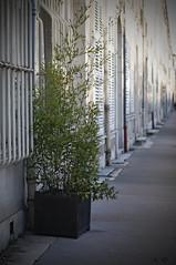 06fvr10 (regisdidier15) Tags: street nikon rue ville d300