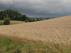 2015 near my village (Waldrebe) Tags: landscape weizenfeld vordemgewitter