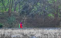 Wating for someone (Farhan Alvee) Tags: outdoor dhaka dailylife bangladesh mirpur dhakacity bangladeshiphotography bdphotography farhansphotography dailylifebd bangladesh2016