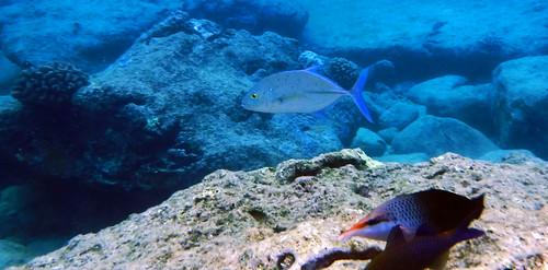 Sharks Cove 2015 23