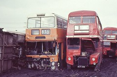 GM BUSES 7448 HJA116N AND LONDON TRANSPORT RM935 WLT935 ARE SEEN AT THE YARD OF PVS CARLTON ON 3 MARCH 1987 (47413PART2) Tags: scrap pvs rm2054