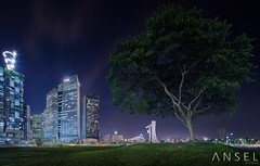 DiamondCity (draken413o) Tags: travel urban panorama tree skyline architecture night marina bay singapore asia skyscrapers centre shift places tilt financial scenes destinations