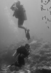 Which Way? (Eric W_) Tags: vacation bw fiji divers kate mitch scuba diving scubadiving diver waidroka
