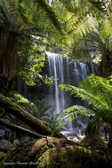 Russell Falls (Jenniferhg97) Tags: water waterfall rocks falls ferns