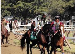 Jockey Pat Day (Shot by Newman) Tags: racetrack 35mm daylight track upstateny kodak400 racehorses nyra outriders saratogany saratogaracecourse patday halloffamejockey shotbynewman