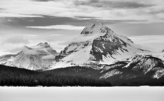Bow Peak and Mount Andromache (Black & White) (thor_mark ) Tags: trees lake canada mountains nature blackwhite overcast snowcapped evergreen alberta day4 frozenover banffnationalpark icefieldsparkway bowlake canadianrockies evergreentrees highway93 lookingse project365 bowpeak mountandromache waptaicefield waputikmountains mountainsindistance bowcrowpeak nikond800e mountainsoffindistance hillsideoftrees vicinitysimpsonsnumtijahlodge murchisongroup centralfrontranges centralmainranges