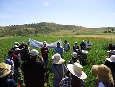 1-Pick-Tunisia (ICARDA-Science for Better Livelihoods in Dry Areas) Tags: farmers northafrica tunisia climatechange mena pulses ifad nutrition resilience drylands icarda incomes westasia croprotation seedsystems conservationagriculture euifad wheatlegumecroppingsystems