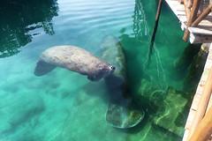 Mexico Riu 2016 204 (greeblehaus) Tags: ocean travel beach mexico playadelcarmen dolphins superbowl rivieramaya xelha riu playacar ecopark familytravel riuhotels riuplayacar riupalacerivieramaya riuhoteles