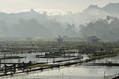 Lake Seloton Morning Scene (lantaw.com) Tags: lake dailylife lakesebu dugoutcanoe tboli southcotabato lakeseloton