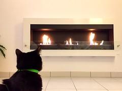 Beethoven devant notre nouvelle cheminée (nic0v0dka) Tags: chimney house home cat fire fireplace chat pussy gato katze fascination fuego feuer feu cheminée chimnea âtre