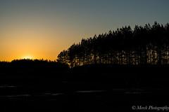 Subtle Sunset (CaveDweller21) Tags: trees sunset nature silhouette pinetree pine photography soft quiet subtle merck merckphotography