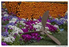 _MG_0744 (Holiness) Tags: orange fleur cotedazur fte citron menton hlice