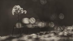 Sunset in the lake... (.: mike | MKvip Beauty :.) Tags: sunset blackandwhite bw lake mamiya nature water monochrome backlight reflections germany prime blackwhite spring europe bokeh availablelight sony ngc naturallight mc npc handheld sw manual monochrom alpha sunsetlight backlighting mth shallowdof 400mm blancetnoir osawa vintagelens primelens schwarzweis manuallens manualexposure extremebokeh smoothbokeh sonyalpha bokehlicious wrthamrhein manualfocusing 56 vintageprime beyondbokeh emount mkvip manualondigital sonyalpha6000 ilce6000 sonyilce6000 sony6000 6000 osawa400mm56mc