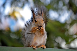 - Look at my beautiful manicure! :-) #Squirrel